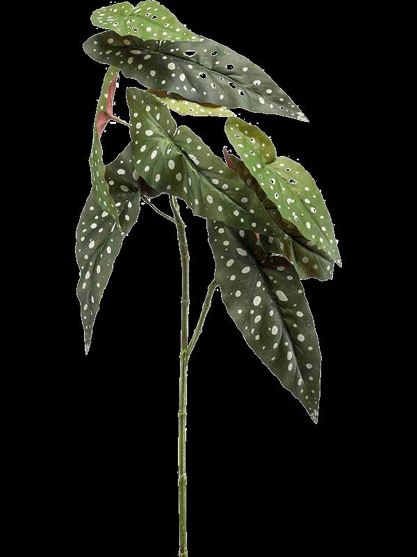 begonia 2.png