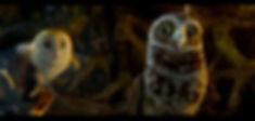 Guardians_02 copy.jpg