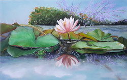 Water lily 38 x 25 cm oil on panel