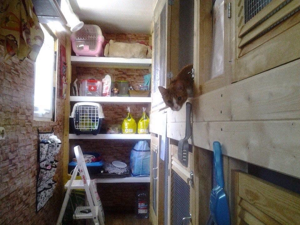 Гостиница для животных в Ярославле