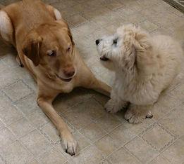 Making friends