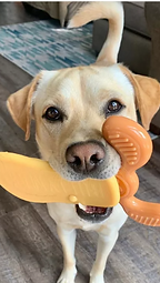 Jake with toy.png
