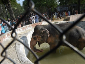 Mismanagement at the Islamabad Zoo: A Tale of Cruelty