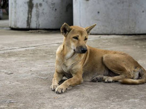 Dog Culling: A Barbarity in Disguise
