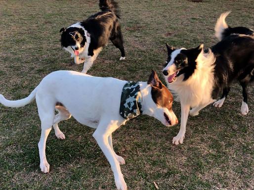 Espaço público para cães, primeiro ParCão, no EcoPark Oeste, é um sucesso em Cascavel