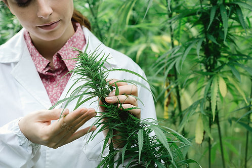 Cannabis related businesses and personnel