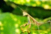 Madagascar (Est) | Forêts pluviales de l'Atsinanana | province Fianarantsoa. En bordure du Parc national de Ranomafana (Alt.800-1200 [m] | >41'600 [ha]). Hiver austral : 27.07.2015 (16:19)