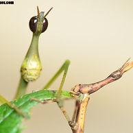 Photos - Orthoptera