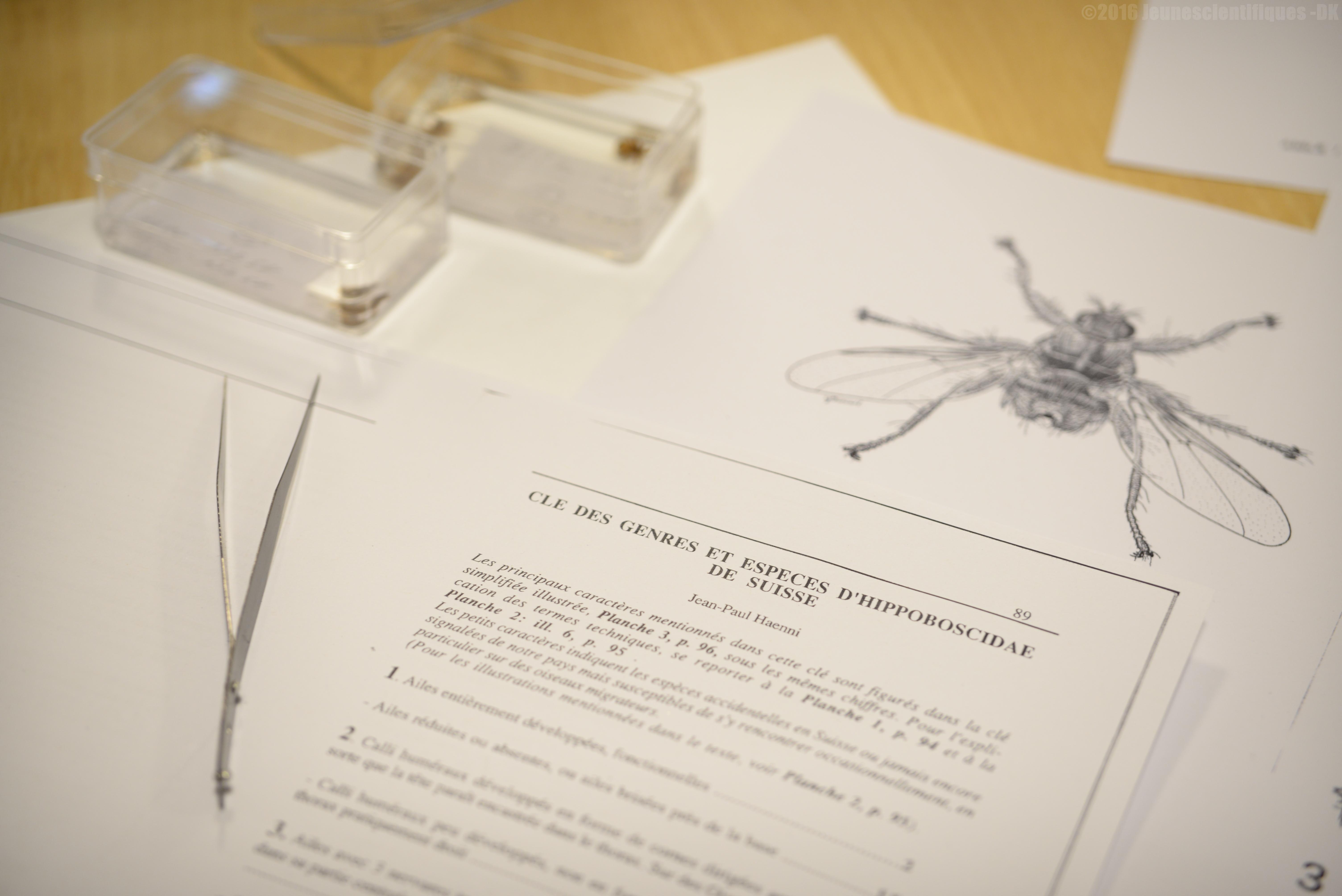SFE-détermination_d'Hippoboscidae_GF