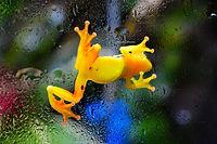 Photos - Amphibia