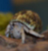 Photos - Coenobitidae