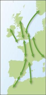 Principaux axes de migration du Merle à plastron en Europe occidentale