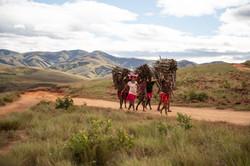 Ramasseurs de bois près du village d'Andranaotra