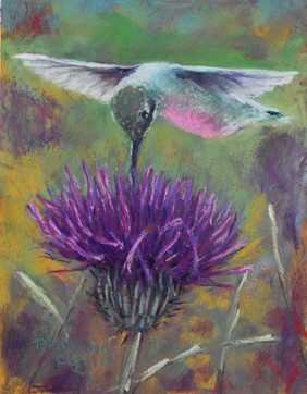 Hummer in a Thistle