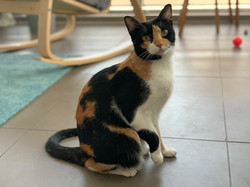 Cat Sitting Dubai, Petsitting