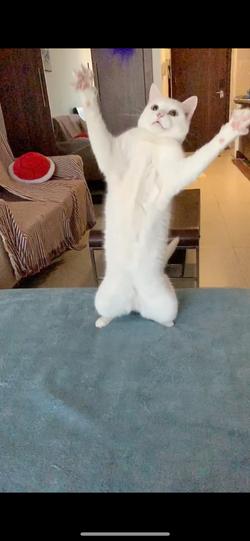Cat visit JLT - Cat Sitting Debra