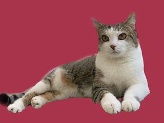 CatSitting Jumeirah.jpg
