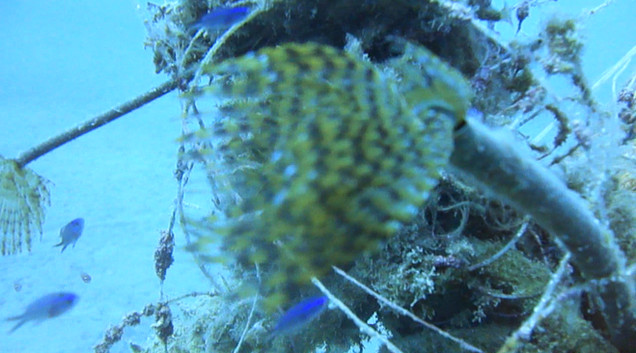 reef.MP4