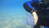 polmone di mare.MP4