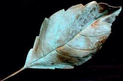 Holy Tulsi Leaf