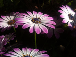 Andrea Solanki Photographie - Blaue Schönheiten