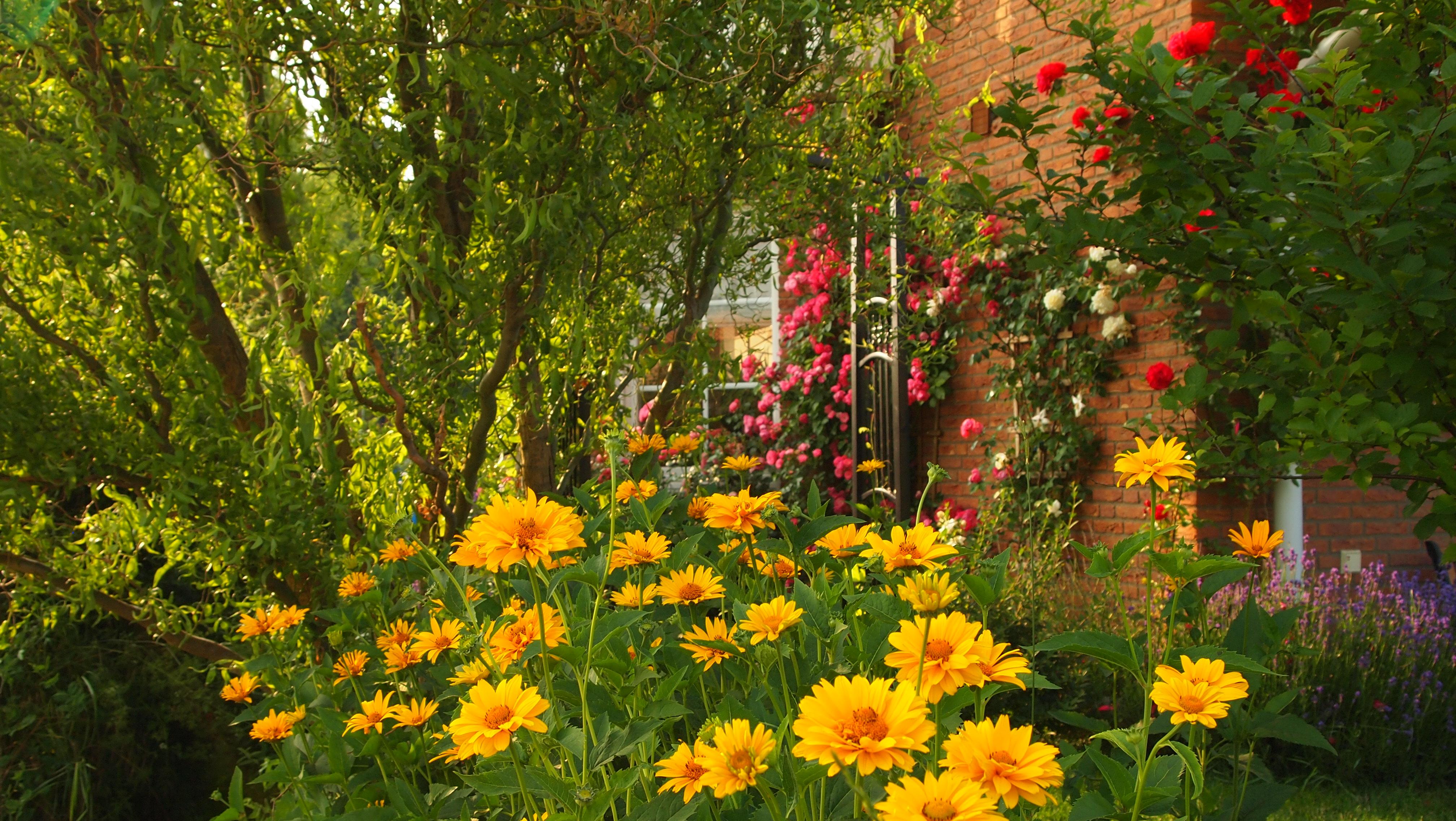 Landleben: Garten