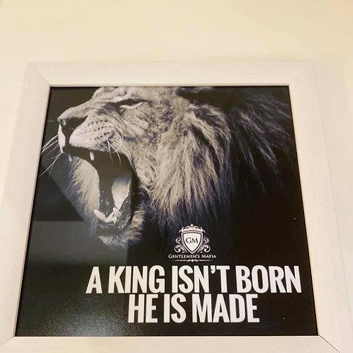 kader Lion 25/25