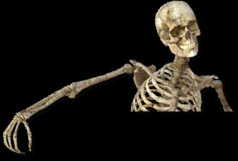 Skeleton_edited.png