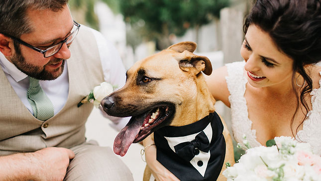 today-pets-weddings-tease-001-161117-117