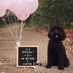 dog-pregnancy-announcement-everymom-1.jp