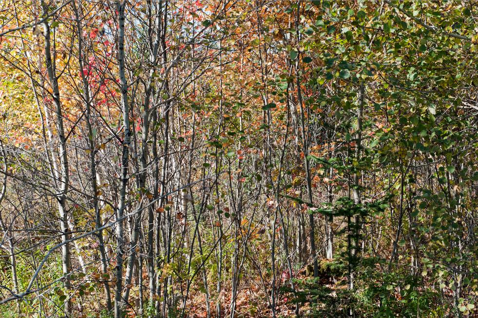 Landscape on Hwy. 17