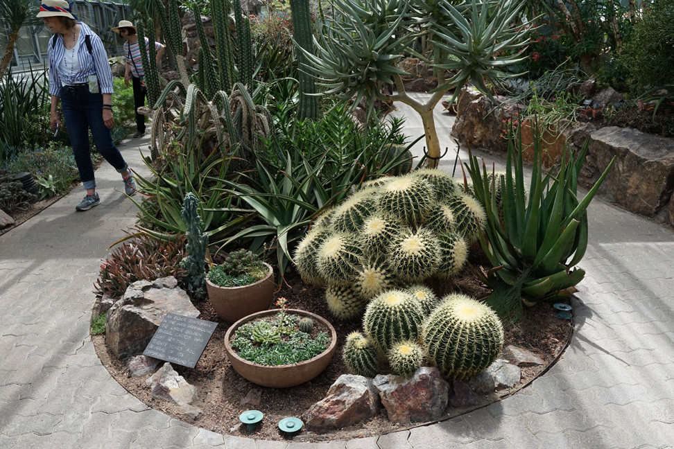 Succulents On View