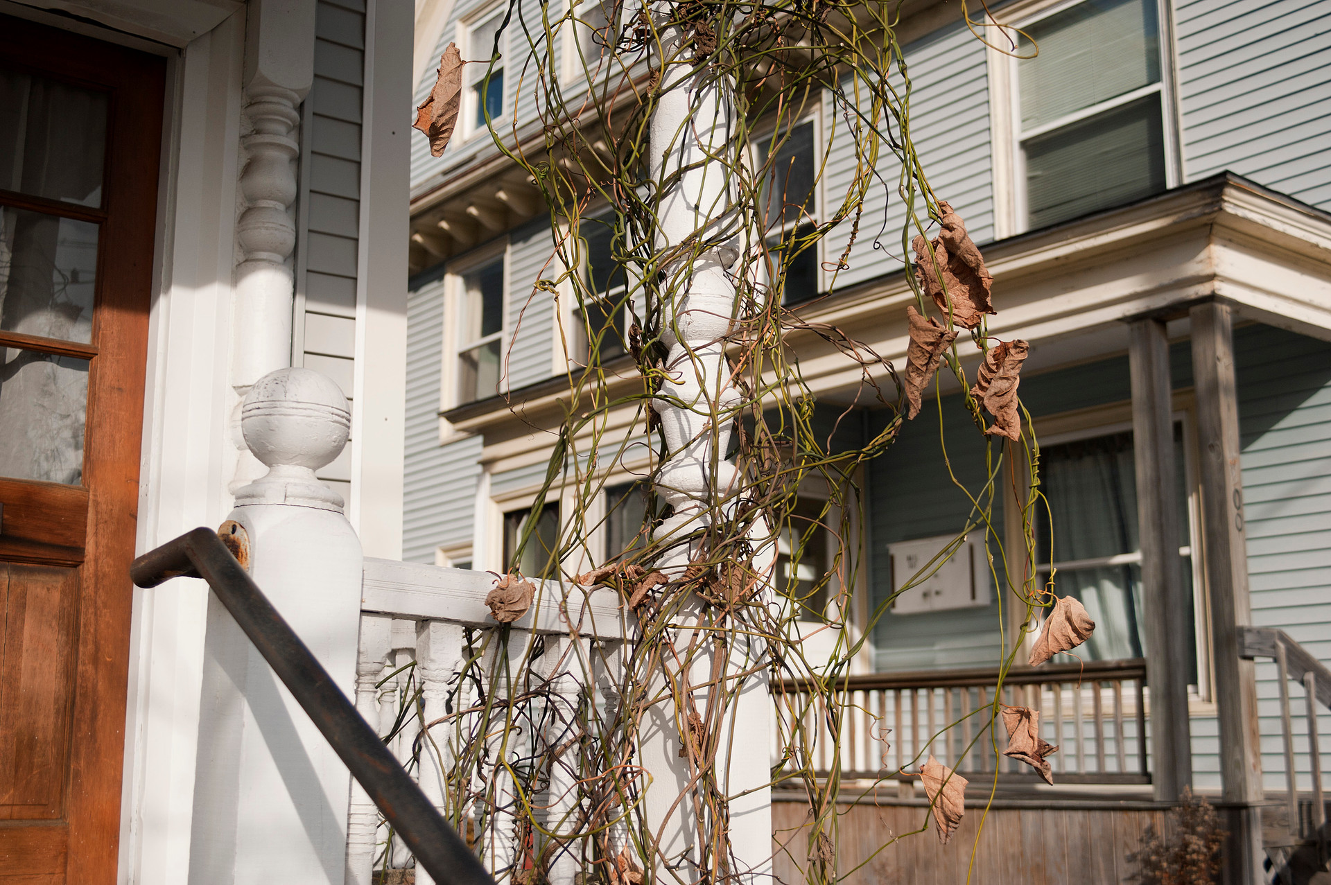 Neighbors and Vine