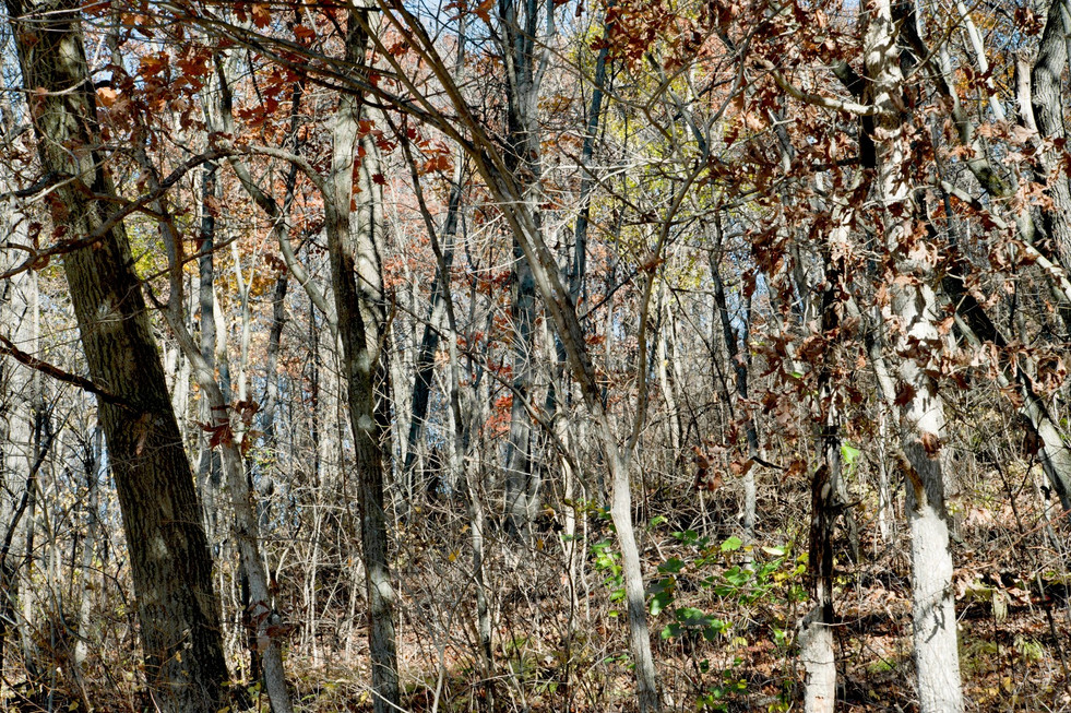 A Walk In The Woods © 2012
