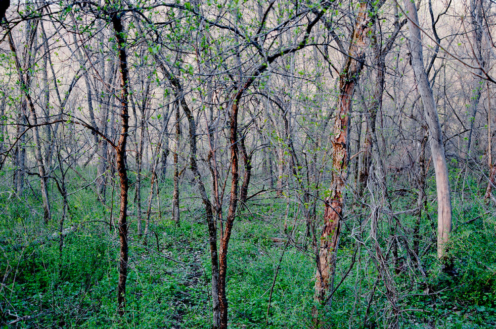 Colofull Grove © 2013
