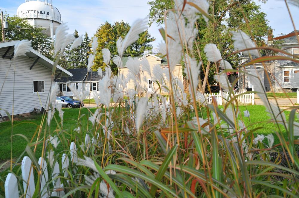 Platteville Grasses © 2012