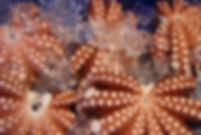 octopus-315285_1280.jpg