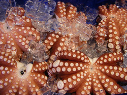 octopus-315285_1280