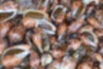 snail-1261429_1920.jpg
