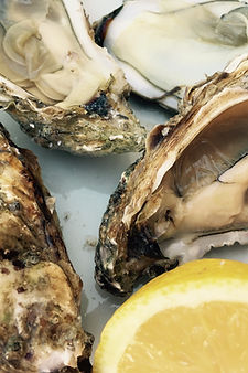 oysters-1264644_1920.jpg