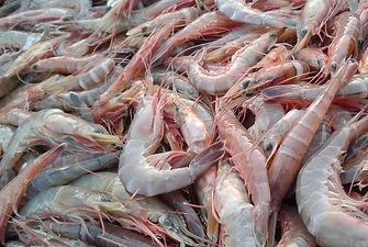 shrimps-1504168_1920.jpg