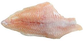 catfish-1798834_1280.jpg