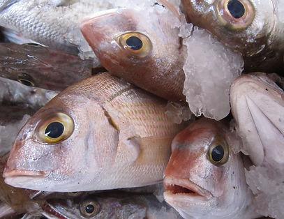 fish-1223126_1920.jpg