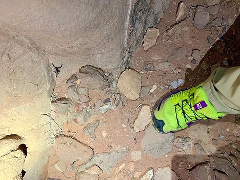 Escorpiones en Wadi Rum. Descubre Sin Limites