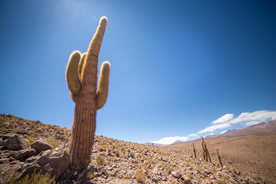 Desierto de Guatín, Atacama