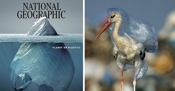 plastic-crisis-impact-on-wildlife-nation