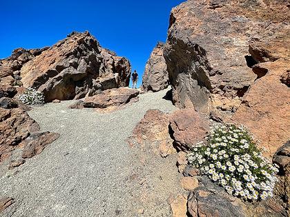 Parque Nacional Teide, Descubre Sin Limites