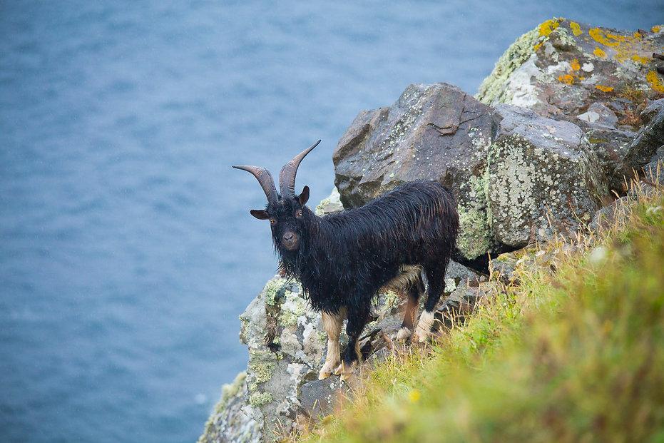Cabo Ortegal, Descube Sin Limites