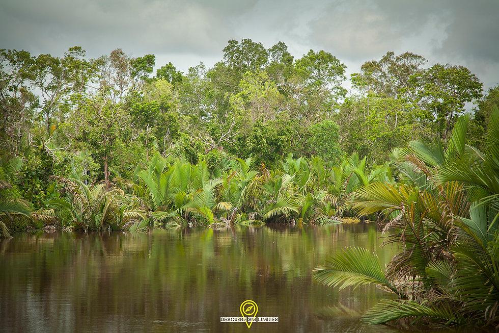 Parque Nacional Tanjung Puting