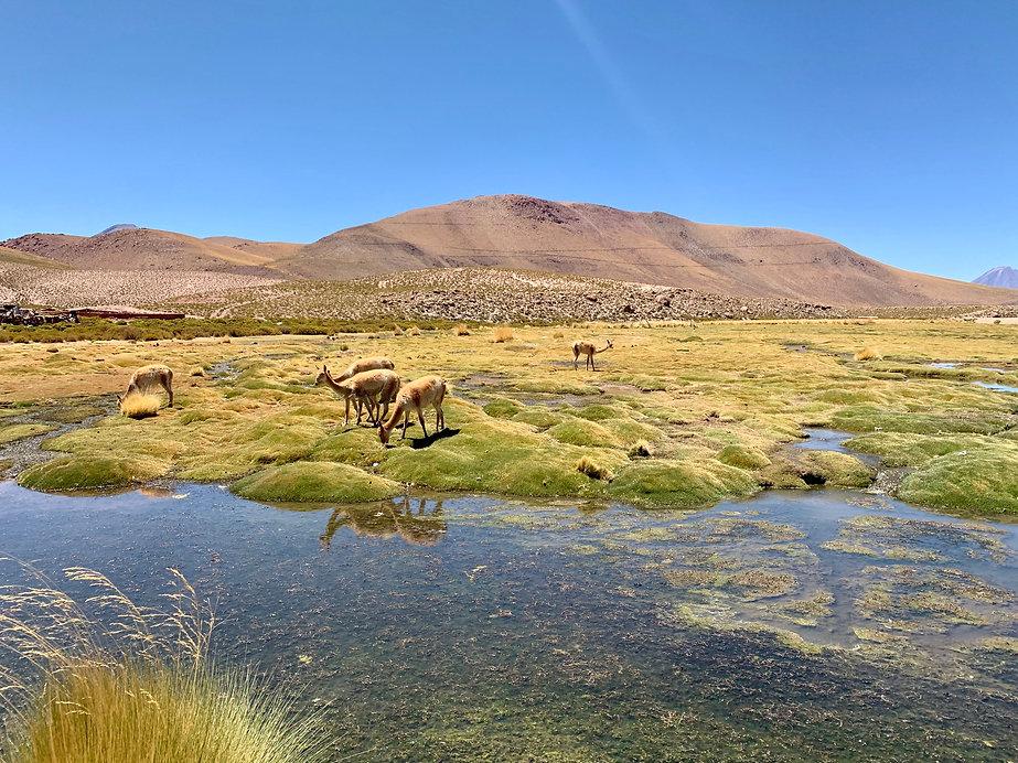 Geiseres del Tatio, Atacama